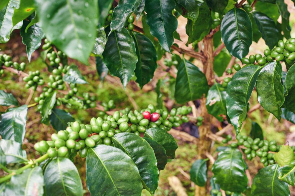 Forida edible garden